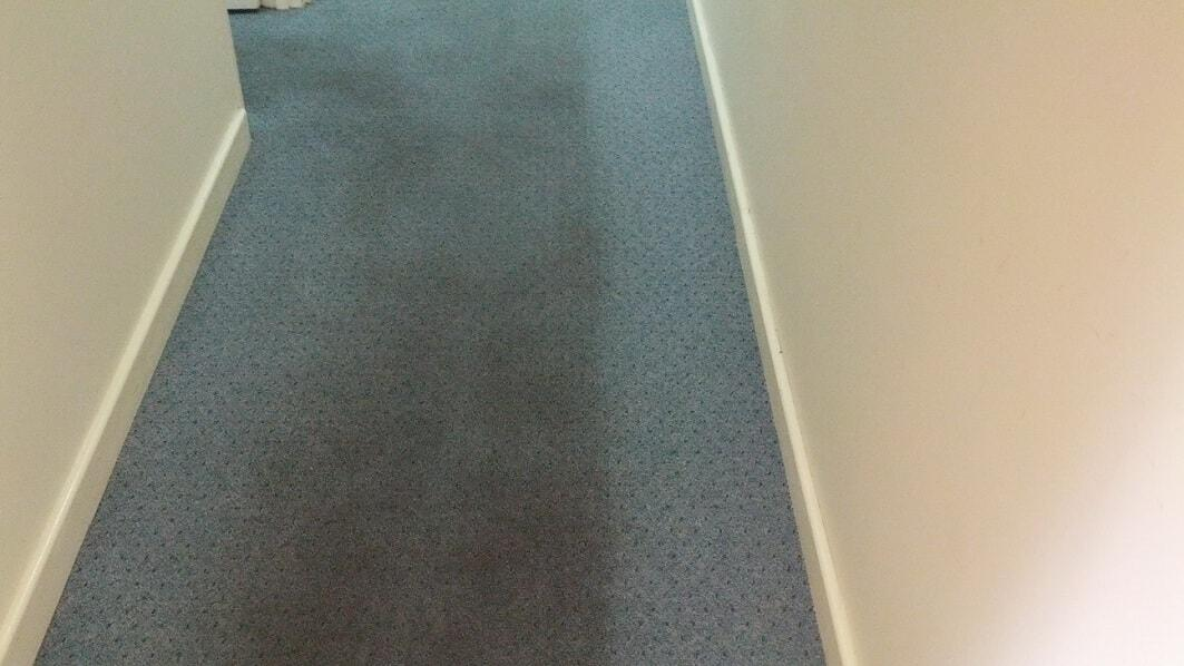 Wool Carpet Steam Cleaning Services In Perth